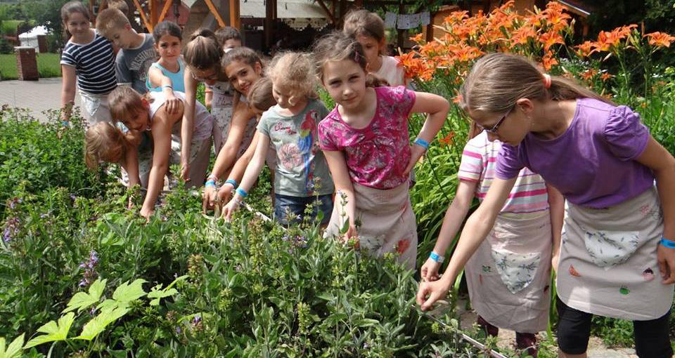 Blog, Fűszer-és gyógynövények betakarítása, szárítása, motiver.hu